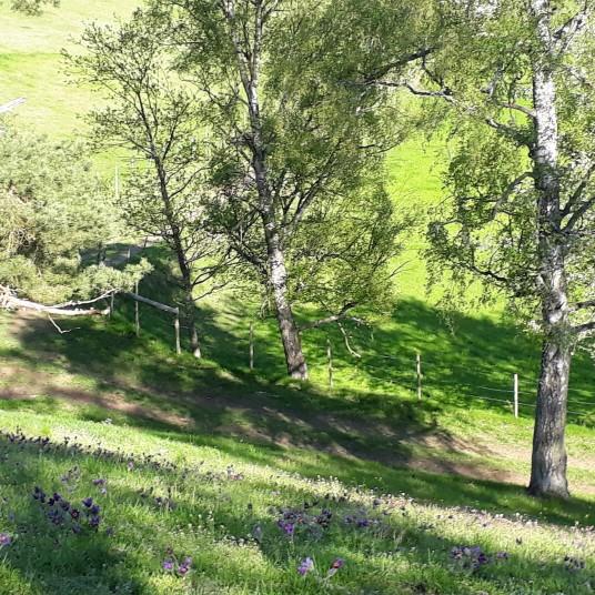 8 maj Locknevi och Djursdala